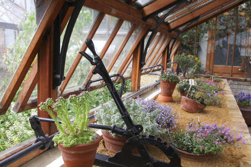 Inside the greenhouse of the botanical garden stock photography
