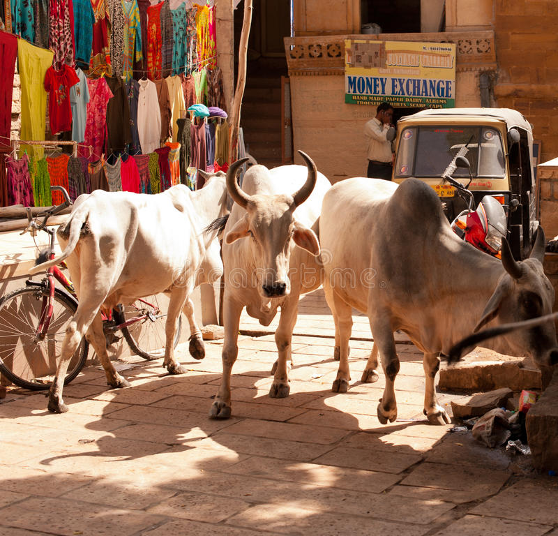 Inside Jaisalmer Fort Editorial Image
