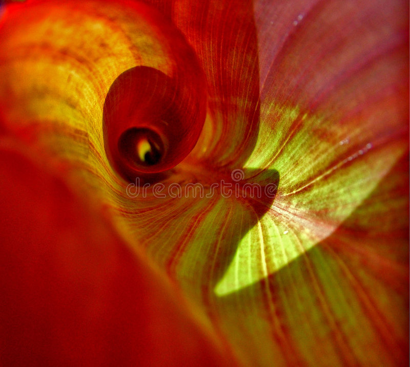 Download Inside Leaf stock image. Image of macro, texture, life - 313427