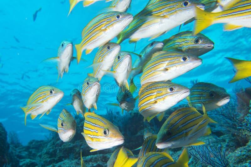 Inside a school of fish underwater stock image