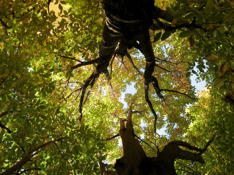 Inside a tree stock photography