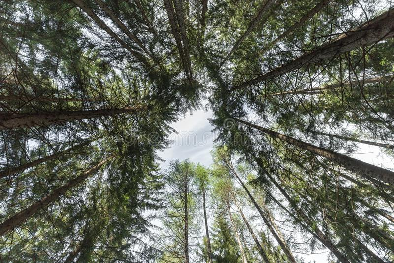 Inside a typical forest of the Italian Alps upside down stock photography