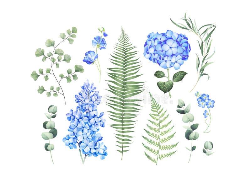 Insieme botanico con i rami dell'eucalyptus, la felce ed i fiori blu isolati su fondo bianco Illustrazione dell'acquerello royalty illustrazione gratis