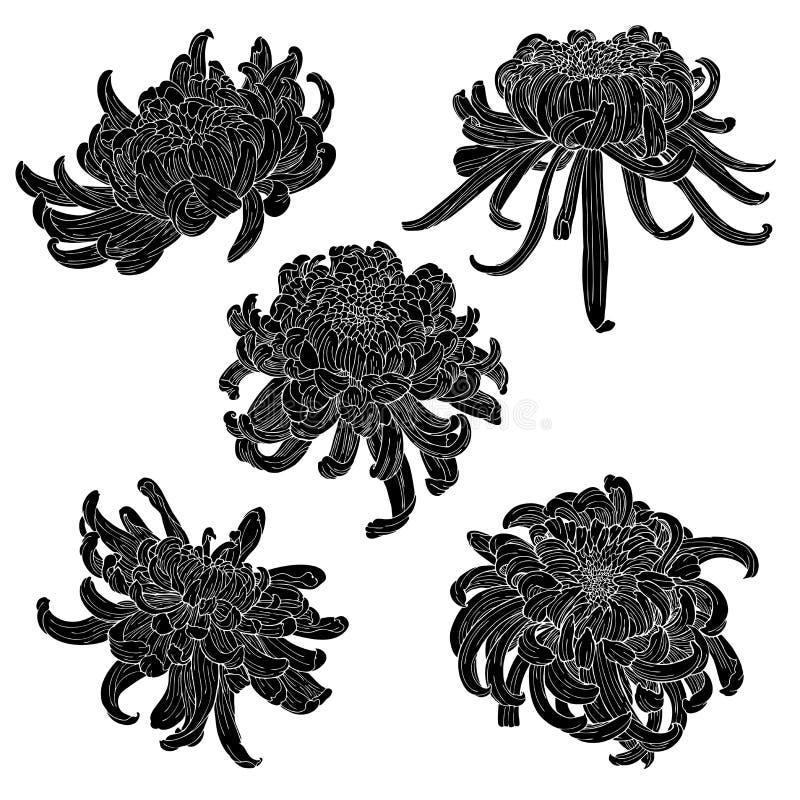 Insieme botanico di schizzo del disegno dell'inchiostro di scarabocchio del crisantemo della siluetta dell'elemento orientale del royalty illustrazione gratis