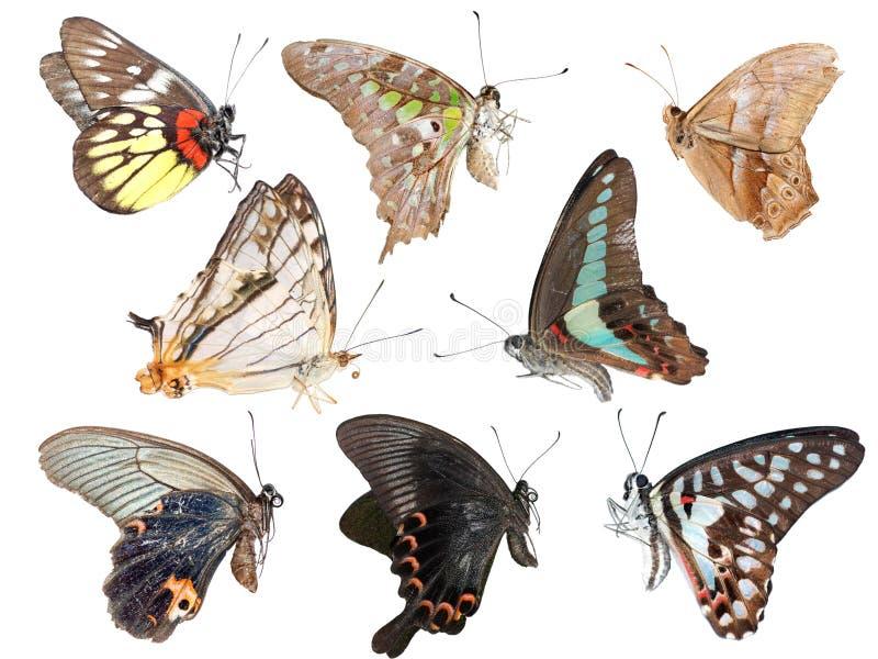 Insieme cinese della farfalla illustrazione di stock