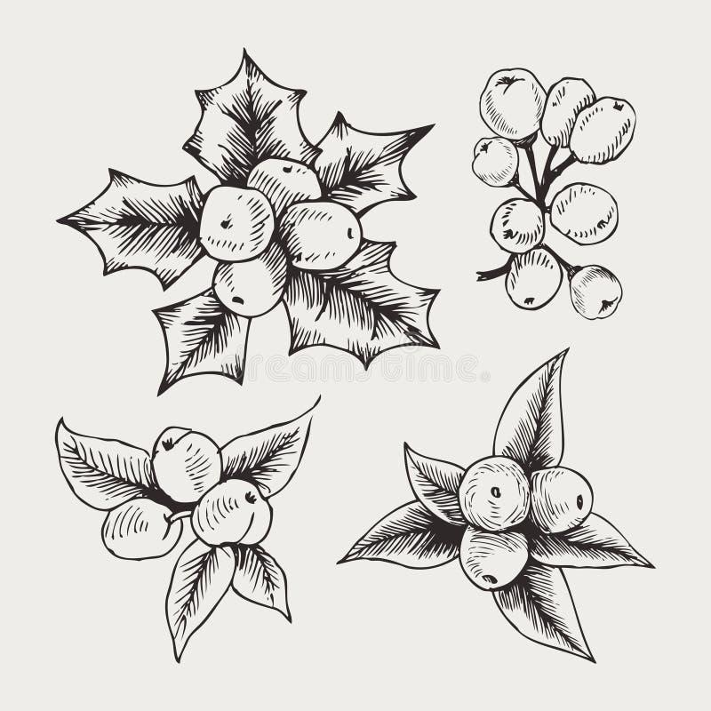 Insieme d'annata di vettore del vischio disegnato a mano, piante della decorazione di Natale di tradizione Grande per l'invito ed royalty illustrazione gratis