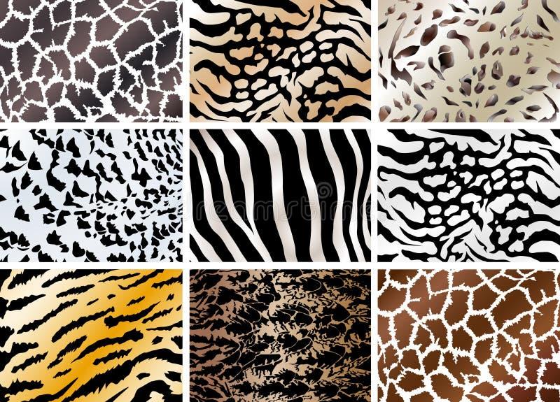 Insieme degli ambiti di provenienza della pelle di animali illustrazione vettoriale