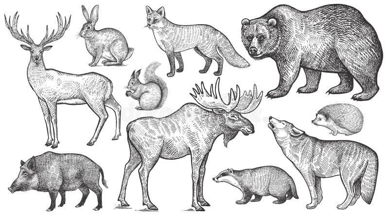 Insieme degli animali della foresta grande royalty illustrazione gratis