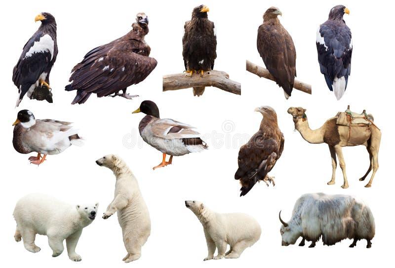 Insieme degli animali. Isolato sopra bianco immagini stock libere da diritti
