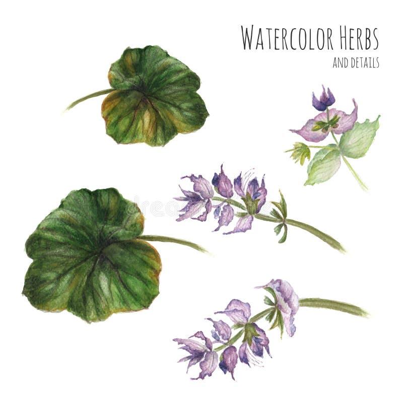 Download Insieme Degli Elementi Floreali Per Le Insegne E La Pubblicità Illustrazione Vettoriale - Illustrazione di floreale, flora: 56881154