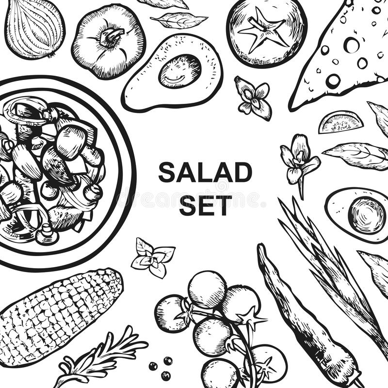 Insieme degli ingredienti dell'insalata su fondo bianco Insalata e verdure royalty illustrazione gratis