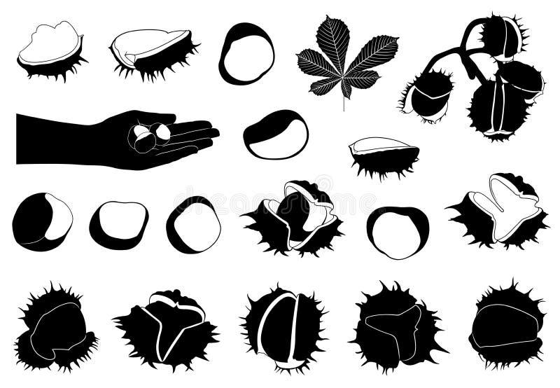 Insieme degli ippocastani differenti illustrazione vettoriale