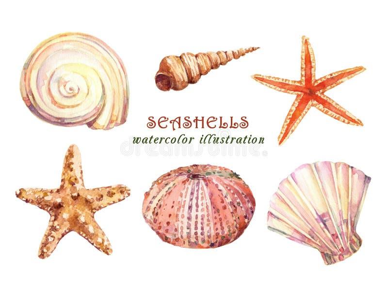 Insieme degli oggetti subacquei di vita - vari conchiglie, stelle marine e riccio di mare tropicali dell'acquerello illustrazione di stock