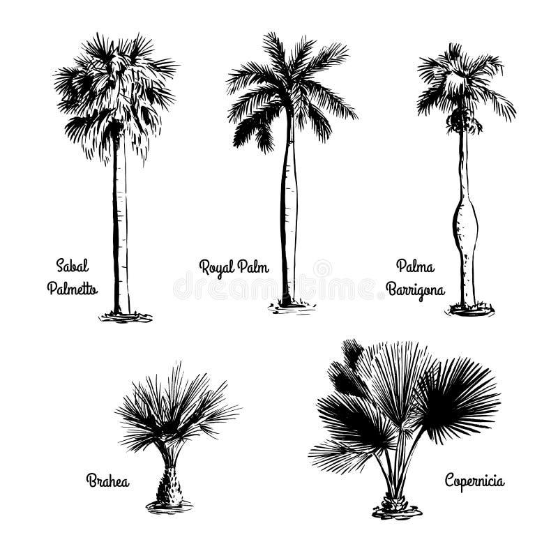 Insieme degli schizzi disegnati a mano della palma royalty illustrazione gratis