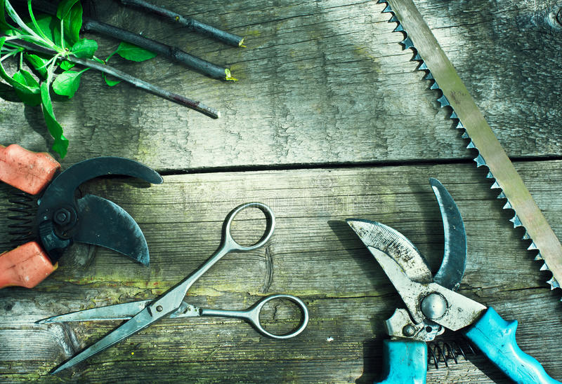 Insieme degli strumenti di giardino Potando nel giardino immagini stock