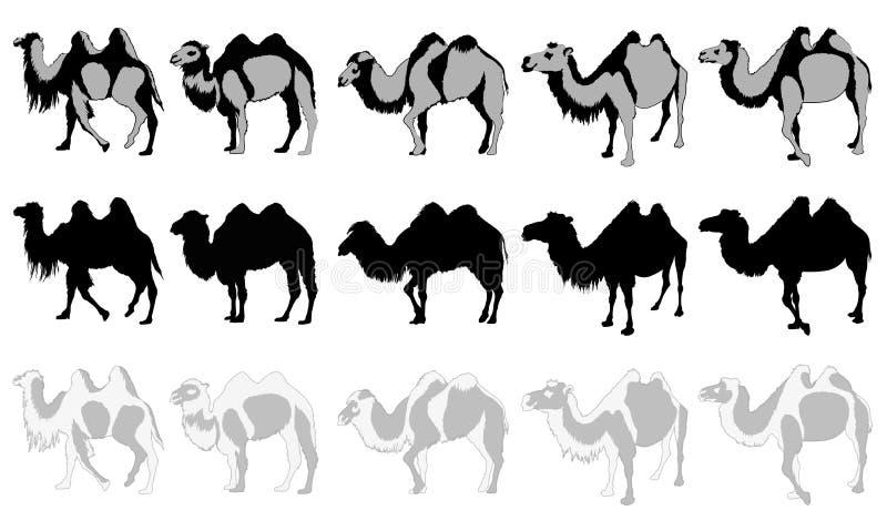 Insieme dei cammelli royalty illustrazione gratis