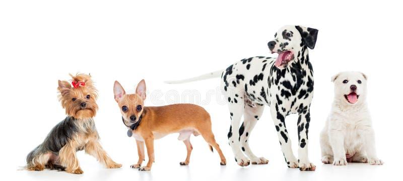 Insieme dei cani di animali domestici fotografia stock