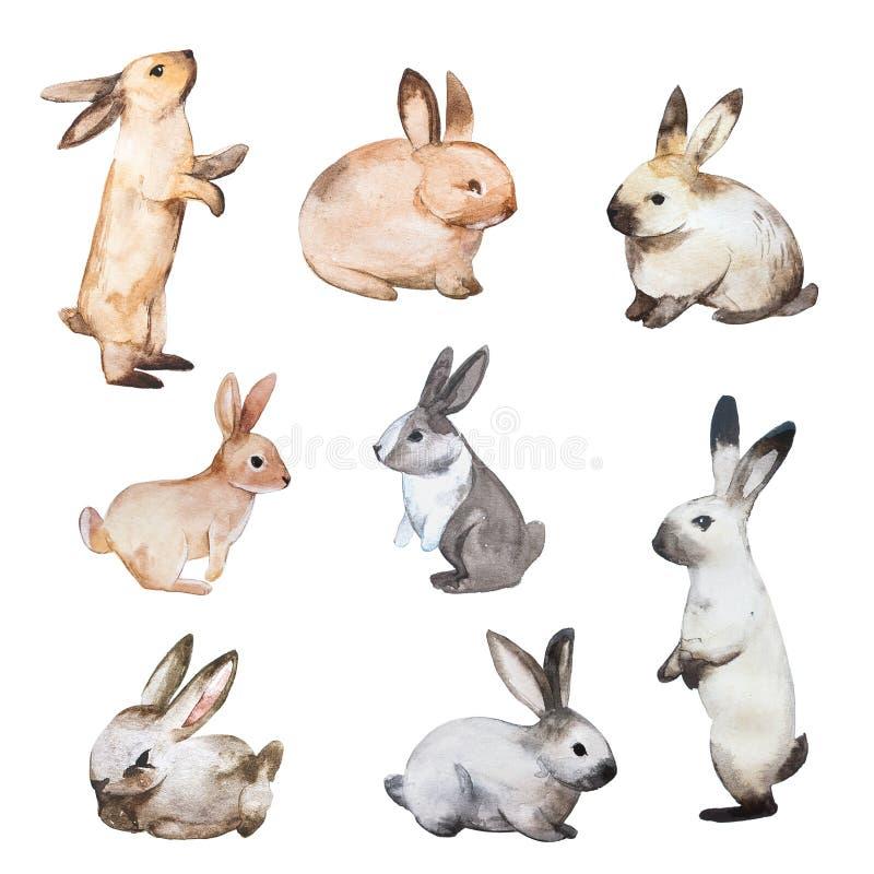 Insieme dei conigli di Pasqua Illustrazioni disegnate a mano dell'acquerello e di schizzo illustrazione di stock