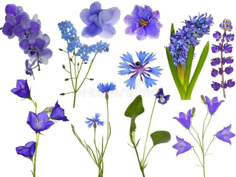 Un insieme di undici fiori blu su bianco fotografie stock