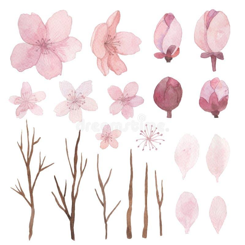 Insieme dei fiori, delle foglie e dei rami illustrazione di stock