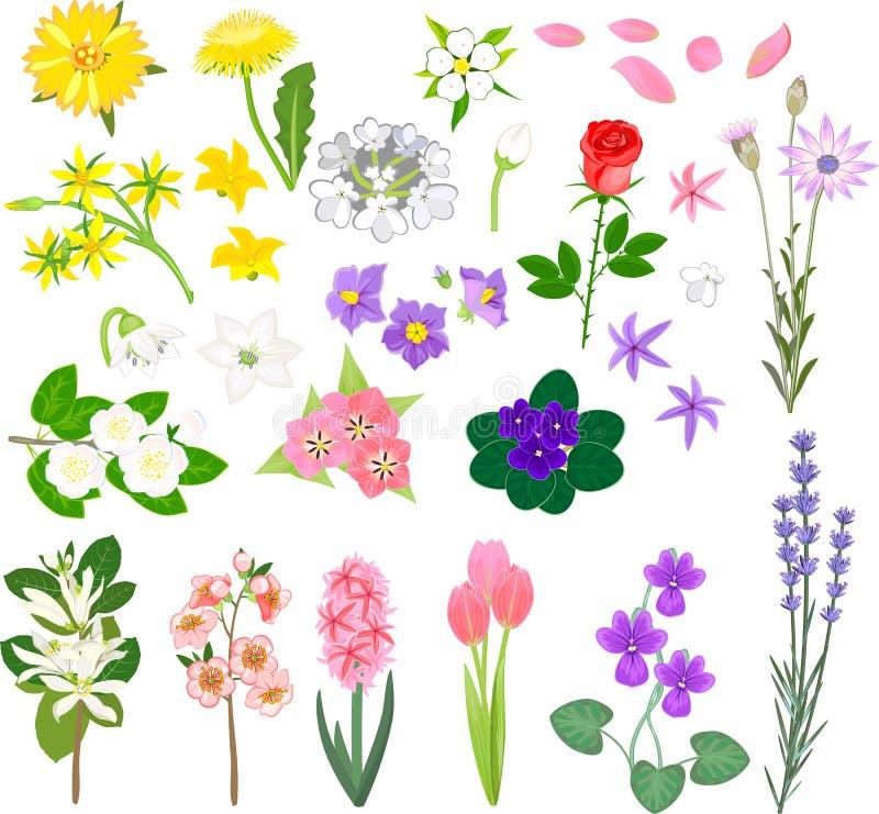 Insieme dei fiori differenti illustrazione di stock