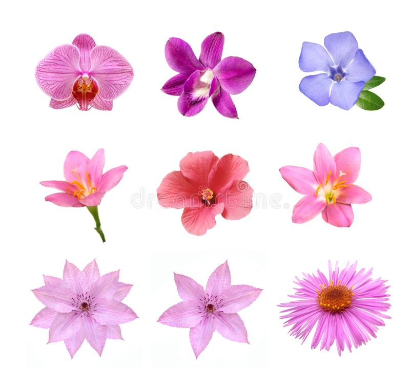 Insieme dei fiori rosa teneri isolati fotografie stock