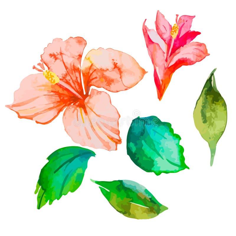 Insieme dei fiori tropicali ibisco Foglie Vettore dell'acquerello illustrazione vettoriale
