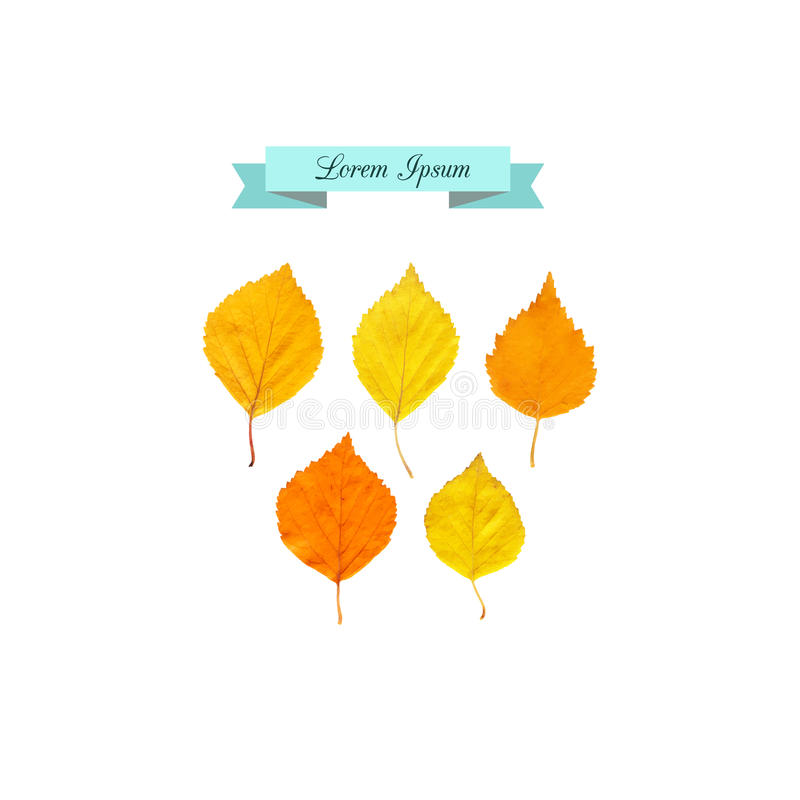 Insieme dei fogli di autunno illustrazione di stock
