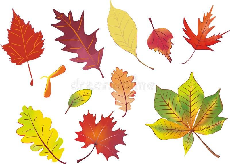Insieme dei fogli di autunno isolati royalty illustrazione gratis
