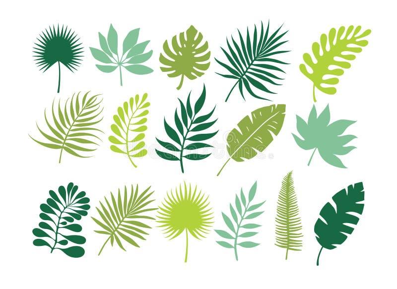 Insieme dei fogli tropicali Fogliame della giungla illustrazione vettoriale