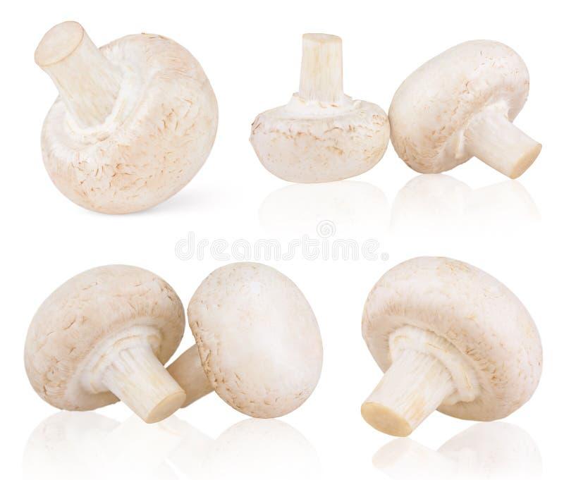 Insieme dei funghi prataioli freschi del fungo immagine stock