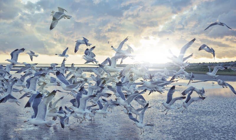 Insieme dei gabbiani di mare al sole fotografia stock