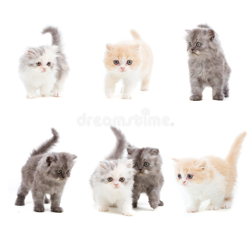 Insieme dei gatti fotografie stock libere da diritti