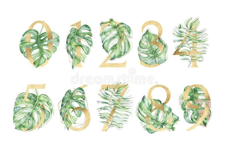 Insieme dei numeri tropicale dorato con le illustrazioni delle foglie verdi immagini stock
