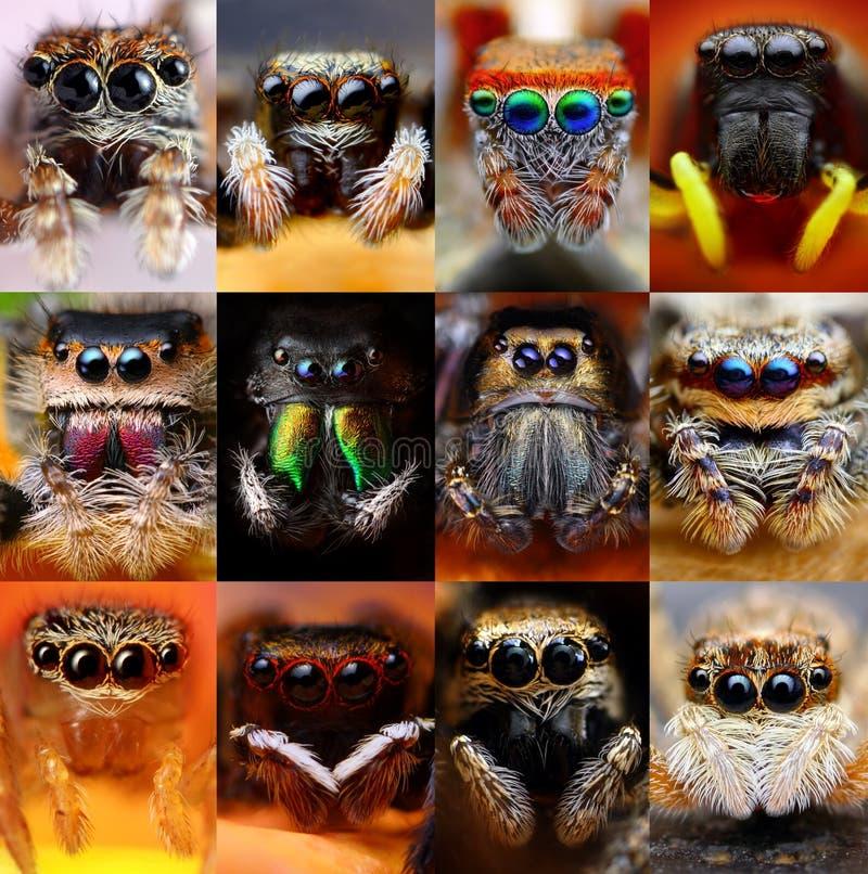 Insieme dei ragni di salto immagini stock