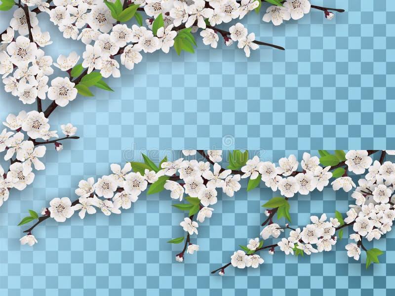 Insieme dei rami di fioritura dell'albero da frutto della molla illustrazione vettoriale