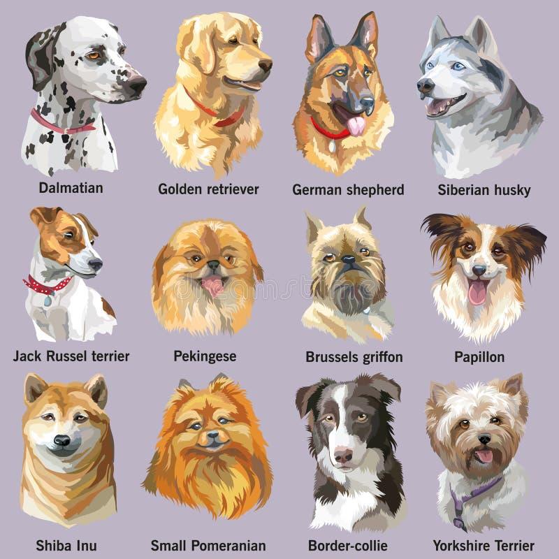 Insieme dei ritratti delle razze del cane royalty illustrazione gratis