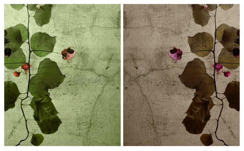 Insieme del Bougainvillea sulla priorità bassa incrinata della parete fotografie stock libere da diritti