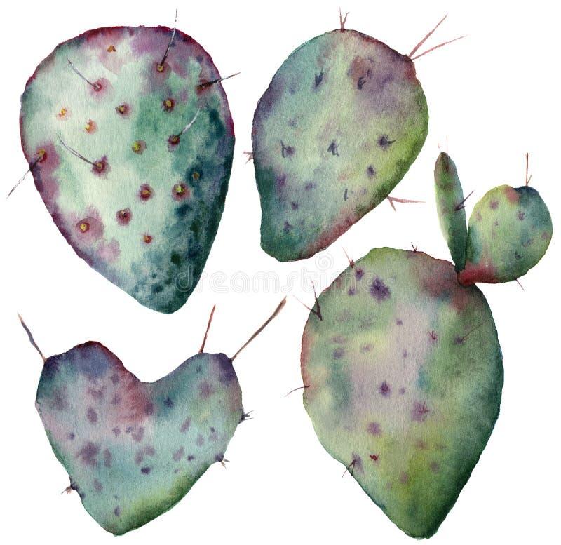 Insieme del cactus dell'acquerello Opunzia dipinta a mano isolata su fondo bianco Illustrazione per progettazione, stampa, tessut illustrazione di stock