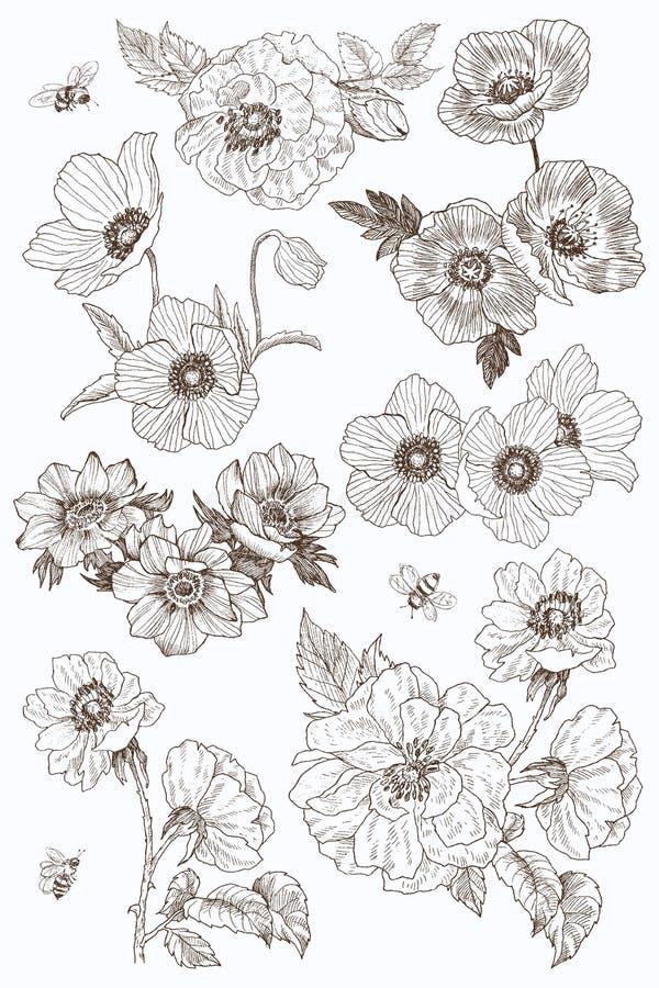 Insieme del disegno di vettore dei fiori del giardino Elementi isolati delle foglie e della pianta selvatica Illustrazione incisa illustrazione di stock