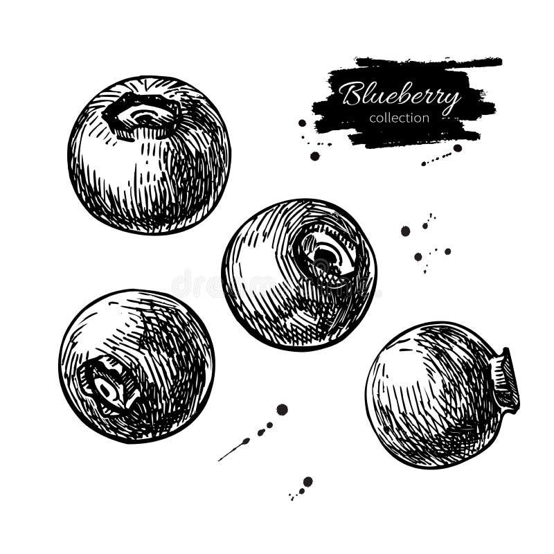 Insieme del disegno di vettore del mirtillo Bacca disegnata a mano isolata su fondo bianco Stile inciso frutta di estate illustrazione di stock