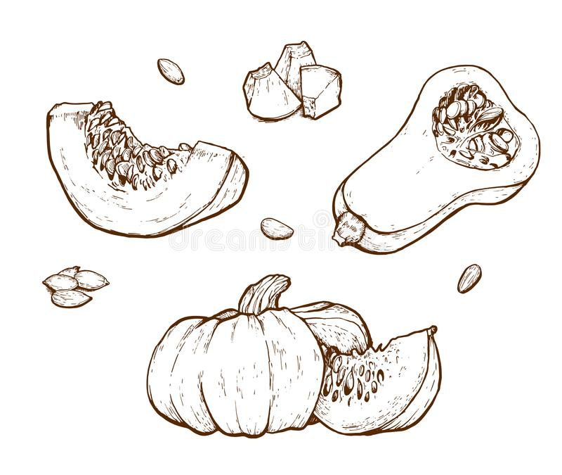 Insieme del disegno di vettore della zucca illustrazione di stock