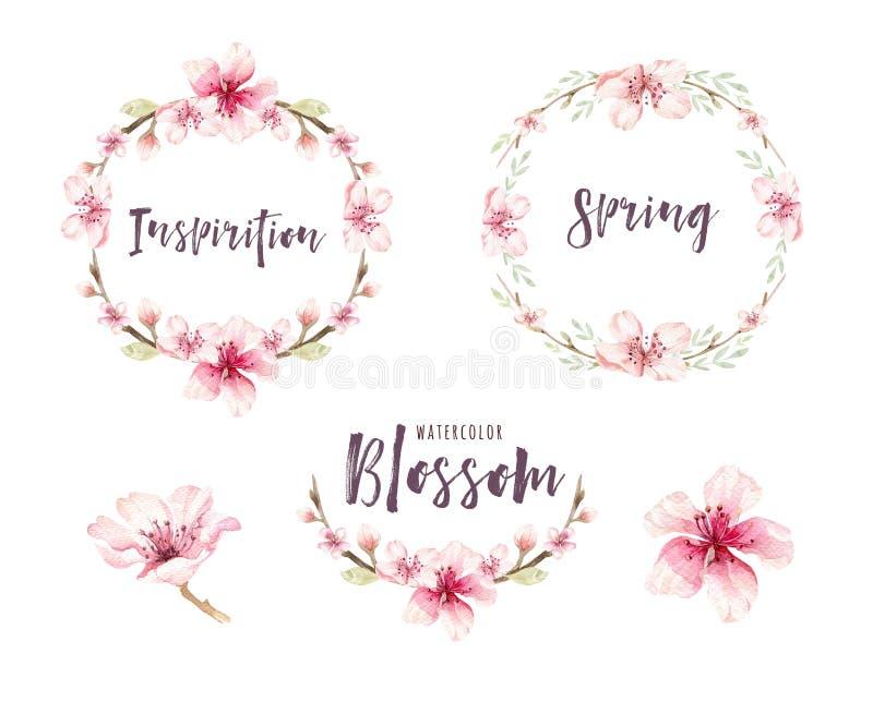 Insieme del fiore del fiore di boho dell'acquerello Decorazione di estate o della primavera illustrazione di stock