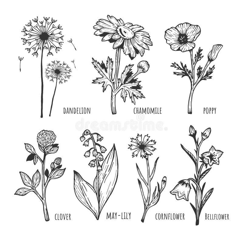 Insieme del fiore della molla del campo royalty illustrazione gratis