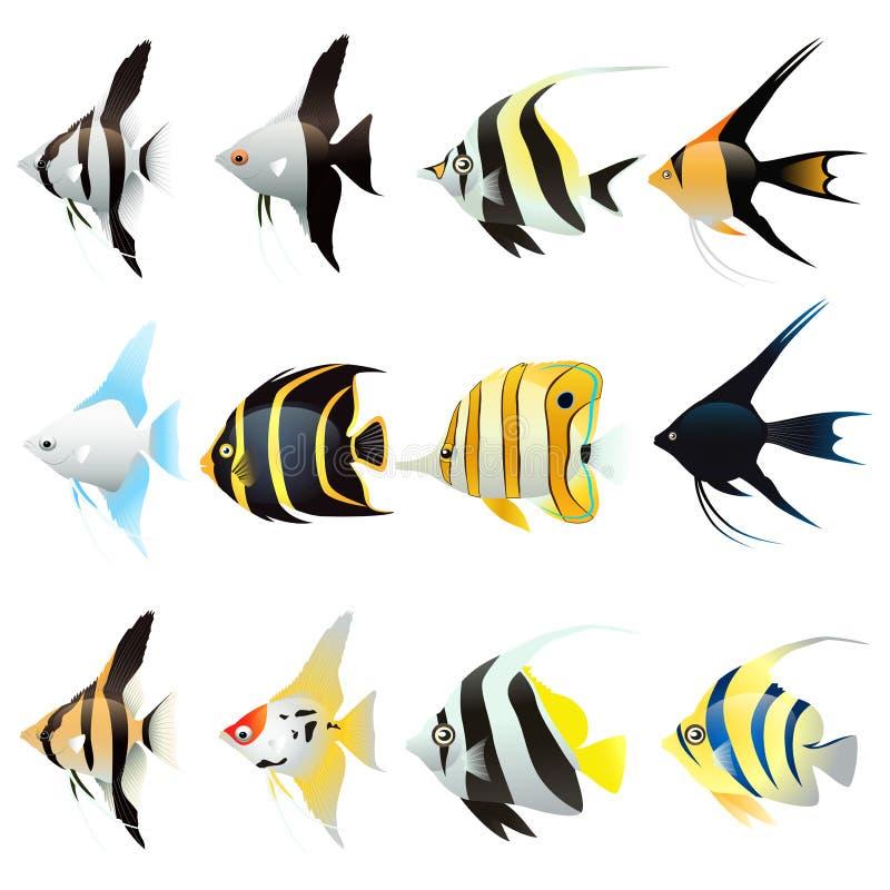 Insieme del fumetto del pesce di angelo illustrazione vettoriale