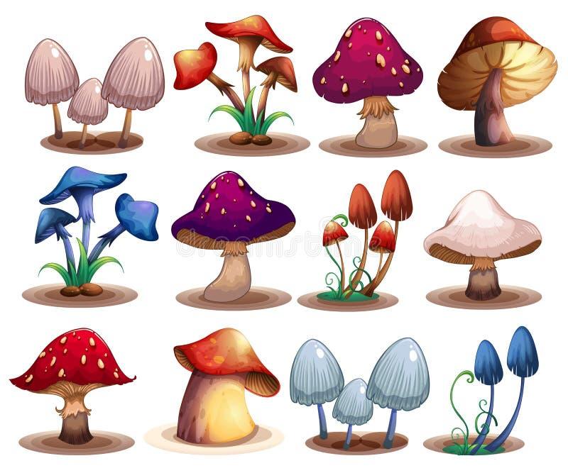 Insieme del fungo illustrazione di stock