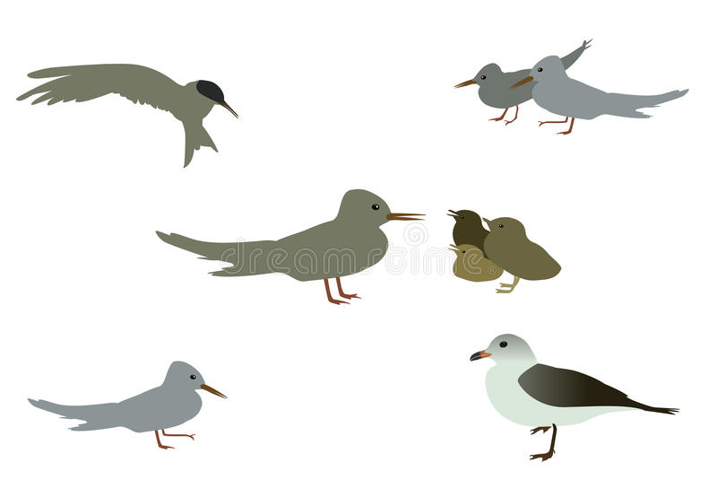 Insieme del gabbiano dell'uccello marino Isolato su priorità bassa bianca Ill di vettore royalty illustrazione gratis