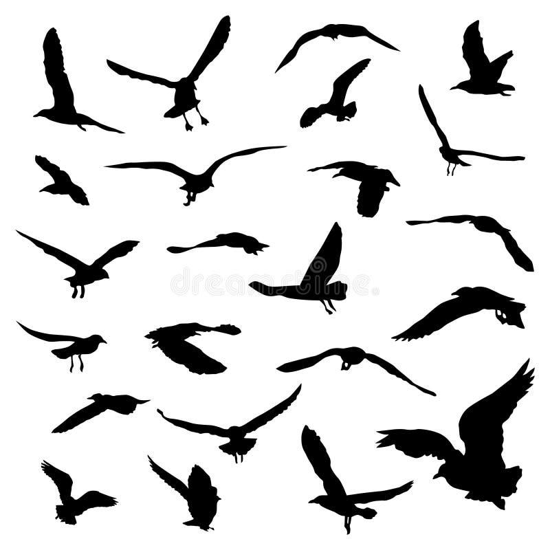 Insieme del gabbiano realistico della siluetta, raccolta di vettore dell'uccello illustrazione vettoriale