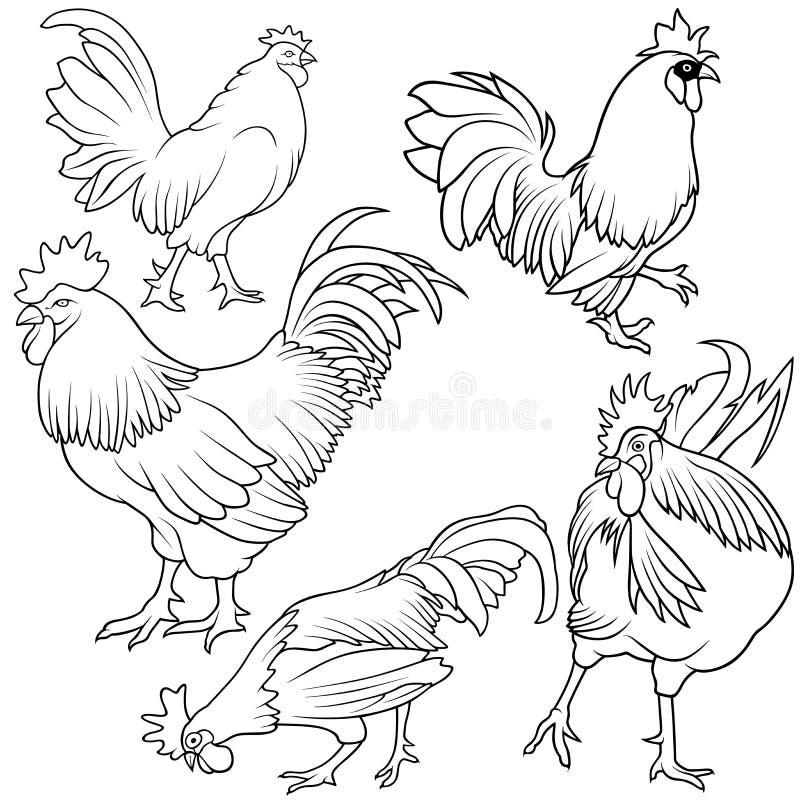 Insieme del gallo royalty illustrazione gratis