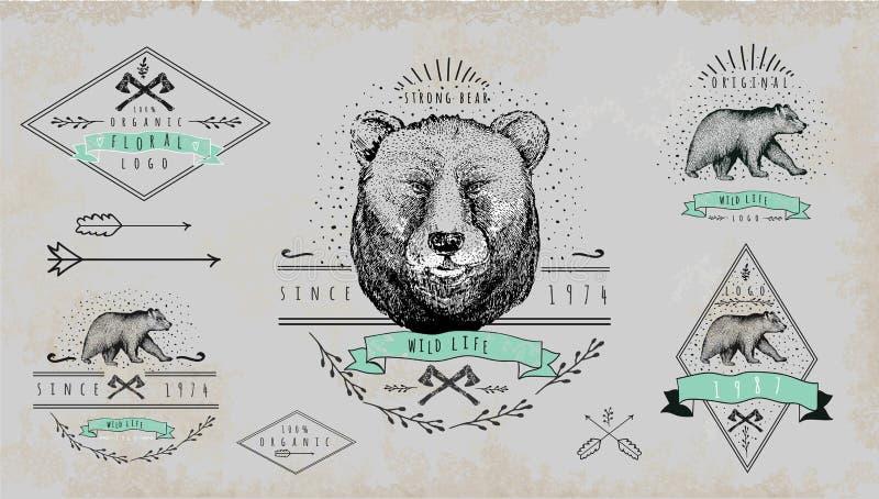 Insieme del logo d'annata dell'orso Progettazione per la maglietta illustrazione vettoriale